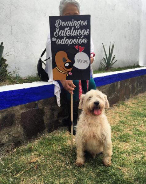 Colaboración con Domingos Satelucos de Adopción 2015-